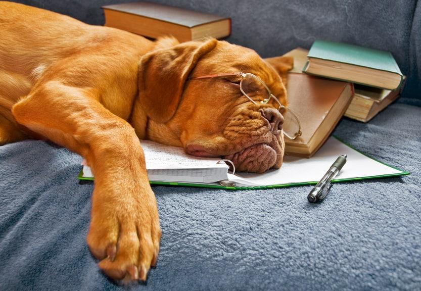 Desmotivação para Estudar